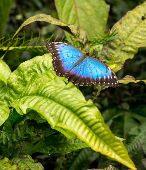 Photo Of Blue Butterfly On Leaves