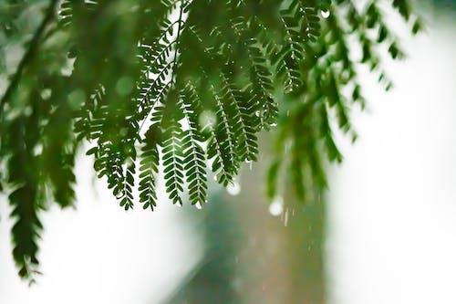 Foto stok gratis alam, cabang, daun