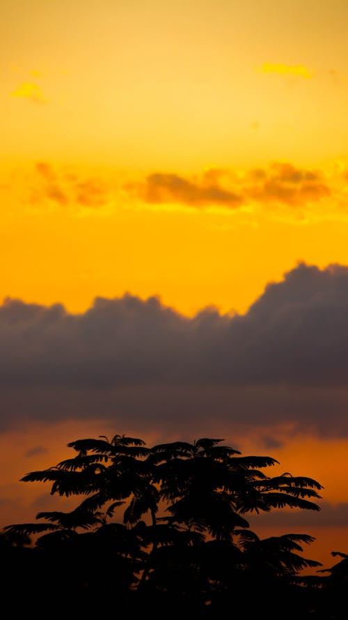 Low angle of silhouette of lush tropical  palms growing against amazing cloudy sky during bright sunset