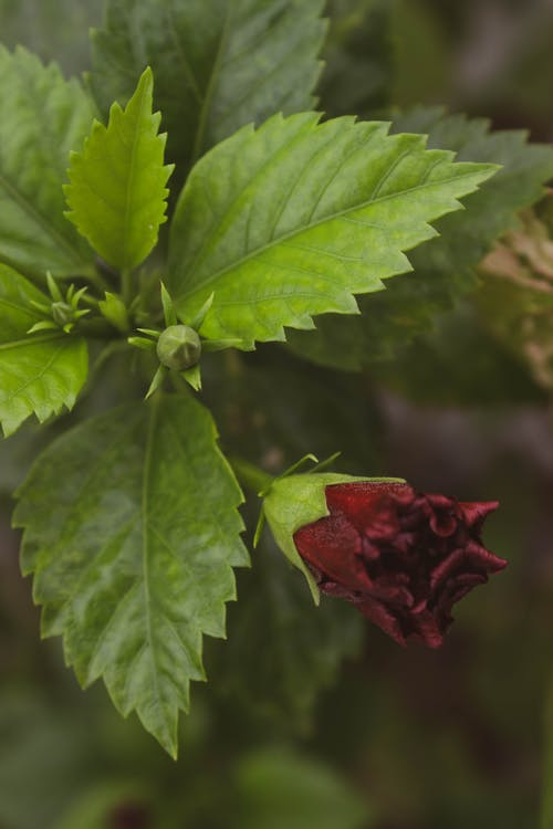 Close-Up Photo Of Red Flower