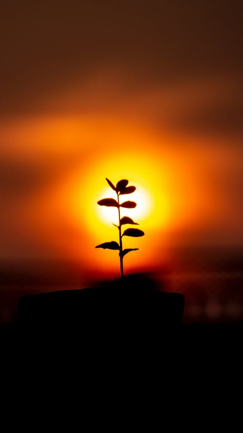 Silhouette of tiny delicate plant growing in savanna against magnificent vivid sundown sky