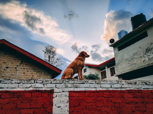 Free stock photo of dog, dog pose, dog sitting
