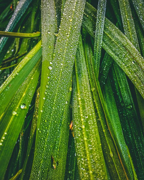 Close-Up Shot of Dewdrops on Green Leaves