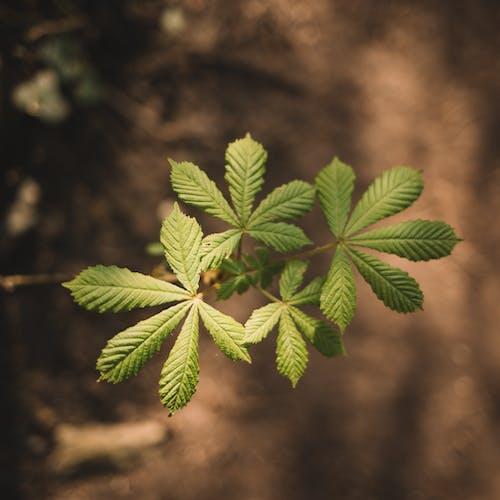 Gratis arkivbilde med anlegg, blader, botanisk, bregne