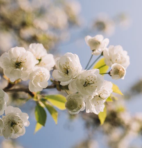 Close-Up Photo Of White Flowers