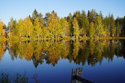 คลังภาพถ่ายฟรี ของ natur, schweden