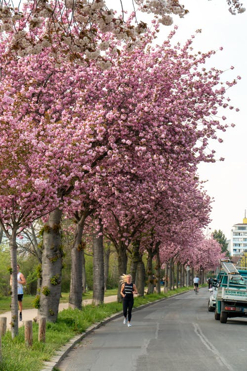 Anonymous sportspeople jogging in city park near blossoming trees