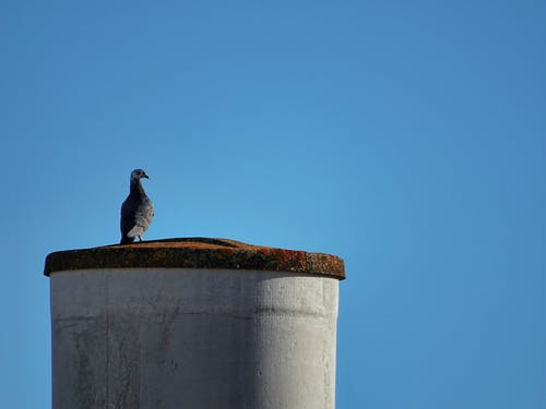 Free stock photo of bird, nature, street