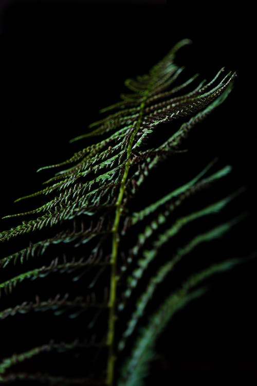 Free stock photo of black background, fern, fern leaf, light and shadow