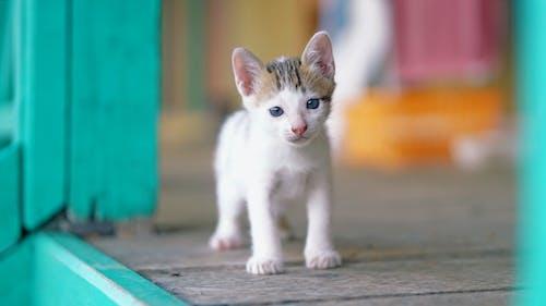 Photo Of White Kitten