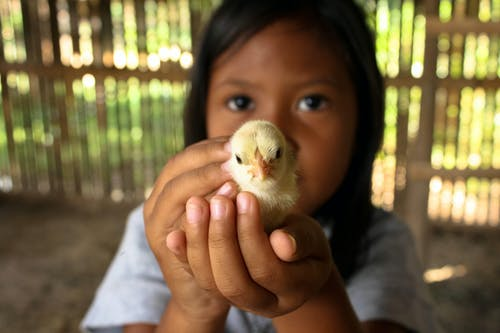 Photo Of Child Holding Chick