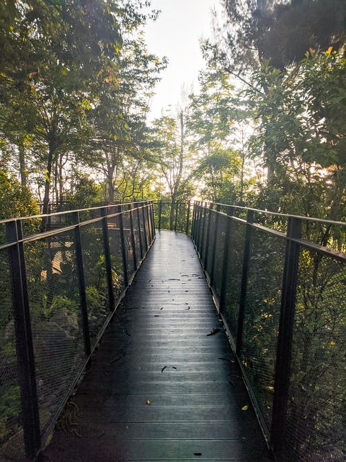 Empty footbridge in lush green forest