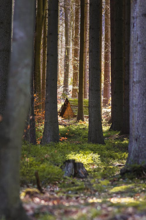 Immagine gratuita di alba, alberi, albero, ambiente