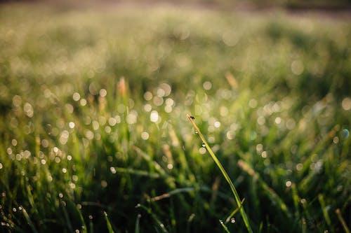 Foto stok gratis alam, berbayang, bidang, embun