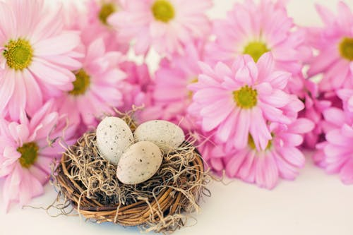 Photo Of Eggs Near Pink Flowers