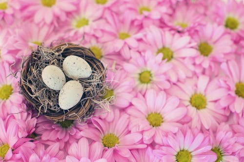 Photo Of Eggs On Top Of Pink Daisy