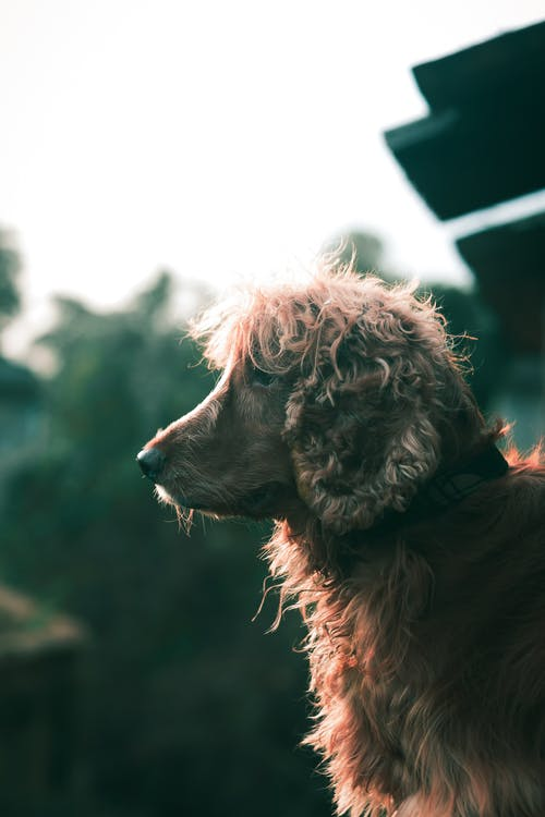 Photo Of Brown Furry Dog