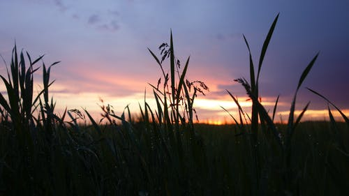 Ilmainen kuvapankkikuva tunnisteilla auringonlasku, kenttä, myrsky, pilvet