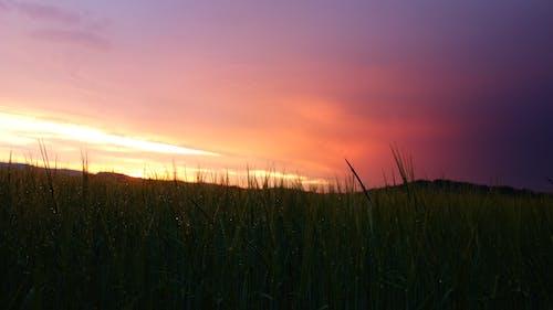 Photos gratuites de clairière, coloré, coucher de soleil, nuages