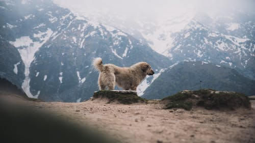 Photo Of Furry Dog