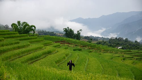 A Scarecrow On Rice Field