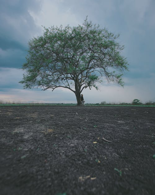 Unrecognizable person leaning to tree in field