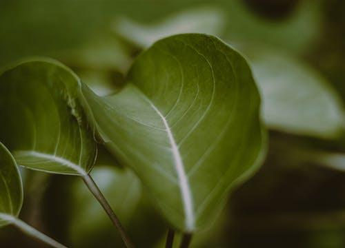 Безкоштовне стокове фото на тему «ботанічний, великий план, вродлива»