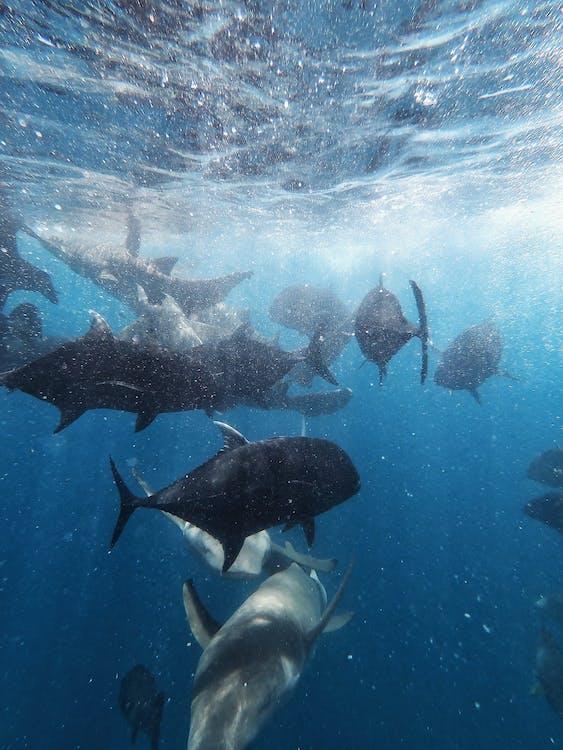 Photo Of Marine Species Under Water