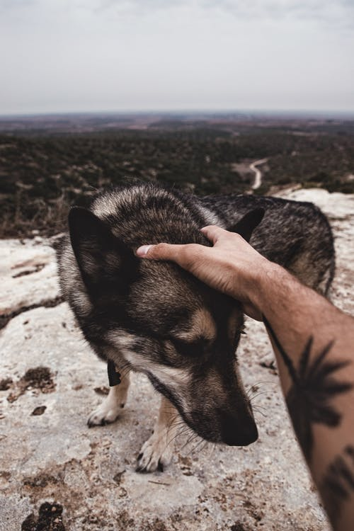 Photo Of Person Touching Dog's Head