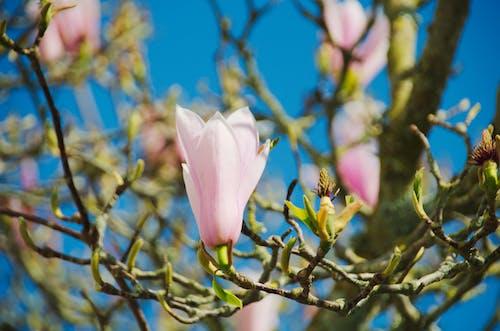 Photos gratuites de arbre, botanique, fleur, flore