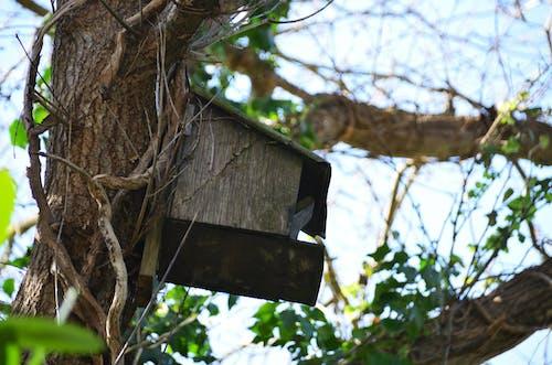 Photos gratuites de nature, nichée, nichoir, nid