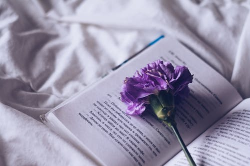 Photo Of Flower Of Book Page