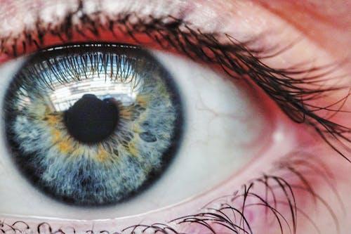 Gratis stockfoto met aantrekkingskracht, blauw oog, gezicht, gezichtsveld