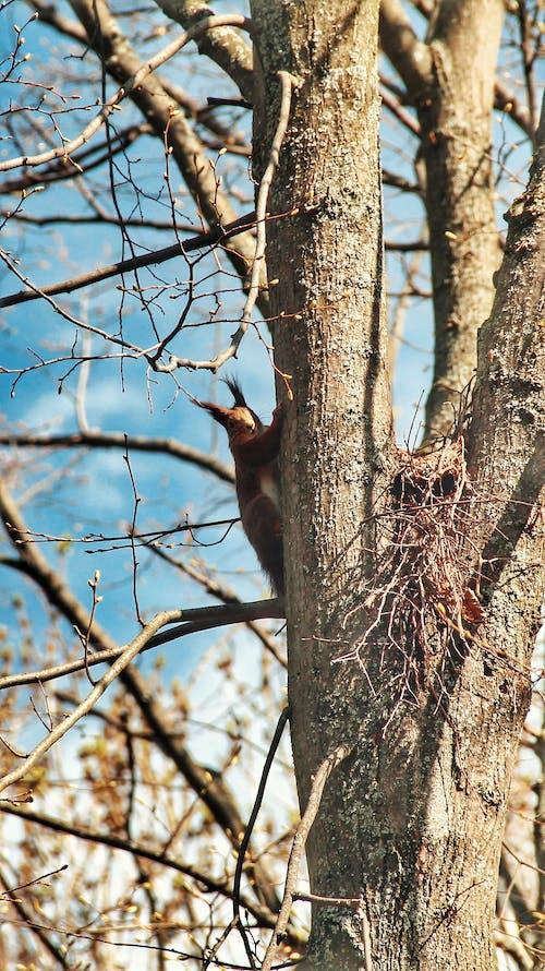 Gratis stockfoto met boom, Bos, eekhoorn, hout