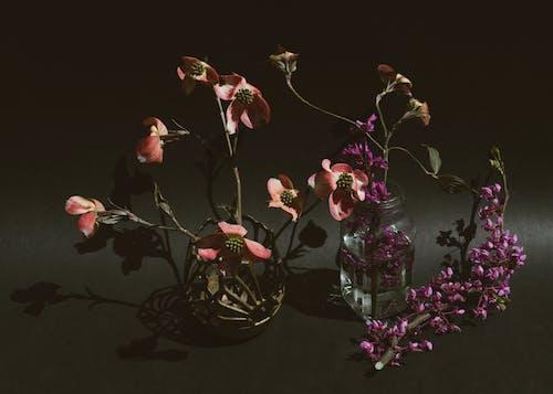 エレガント, チューリップ, つぼみ, バックグラウンドの無料の写真素材