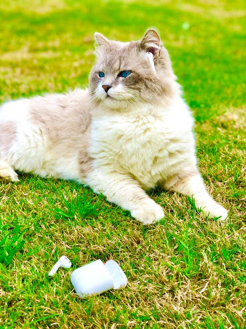 Foto d'estoc gratuïta de adorable, animal, animal domèstic, bigotis