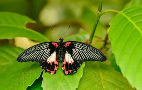 Exotic butterfly on green leaf in park