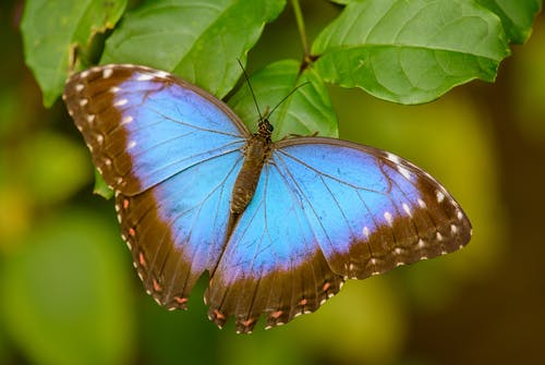 Colorful butterfly on green leaf of plant