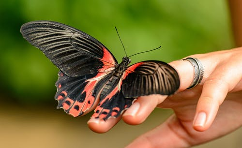 Closeup of butterfly sitting on hand of faceless crop person against green blurred background