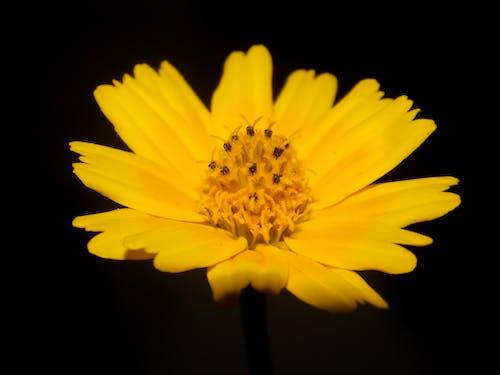 Fotos de stock gratuitas de amarillo dorado, flor amarilla, flores, hermosa flor