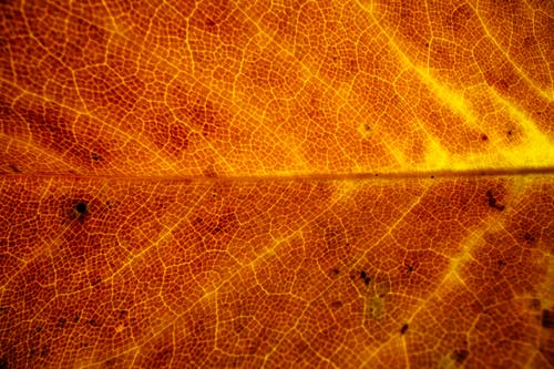 Golden autumn leaf in closeup