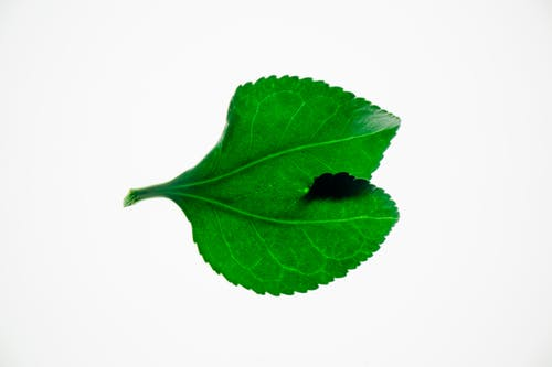 Simple green leaf in closeup