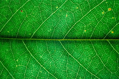 Macro texture of bright green leaf