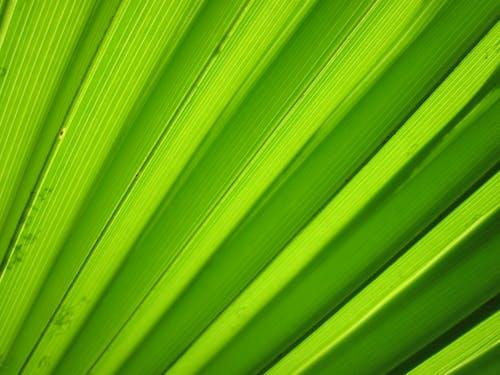 Gratis arkivbilde med anlegg, flora, grønn, makro