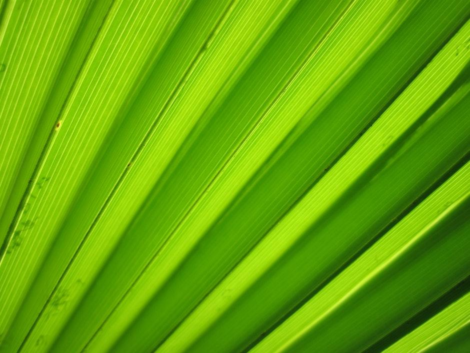 flora, green, leaf