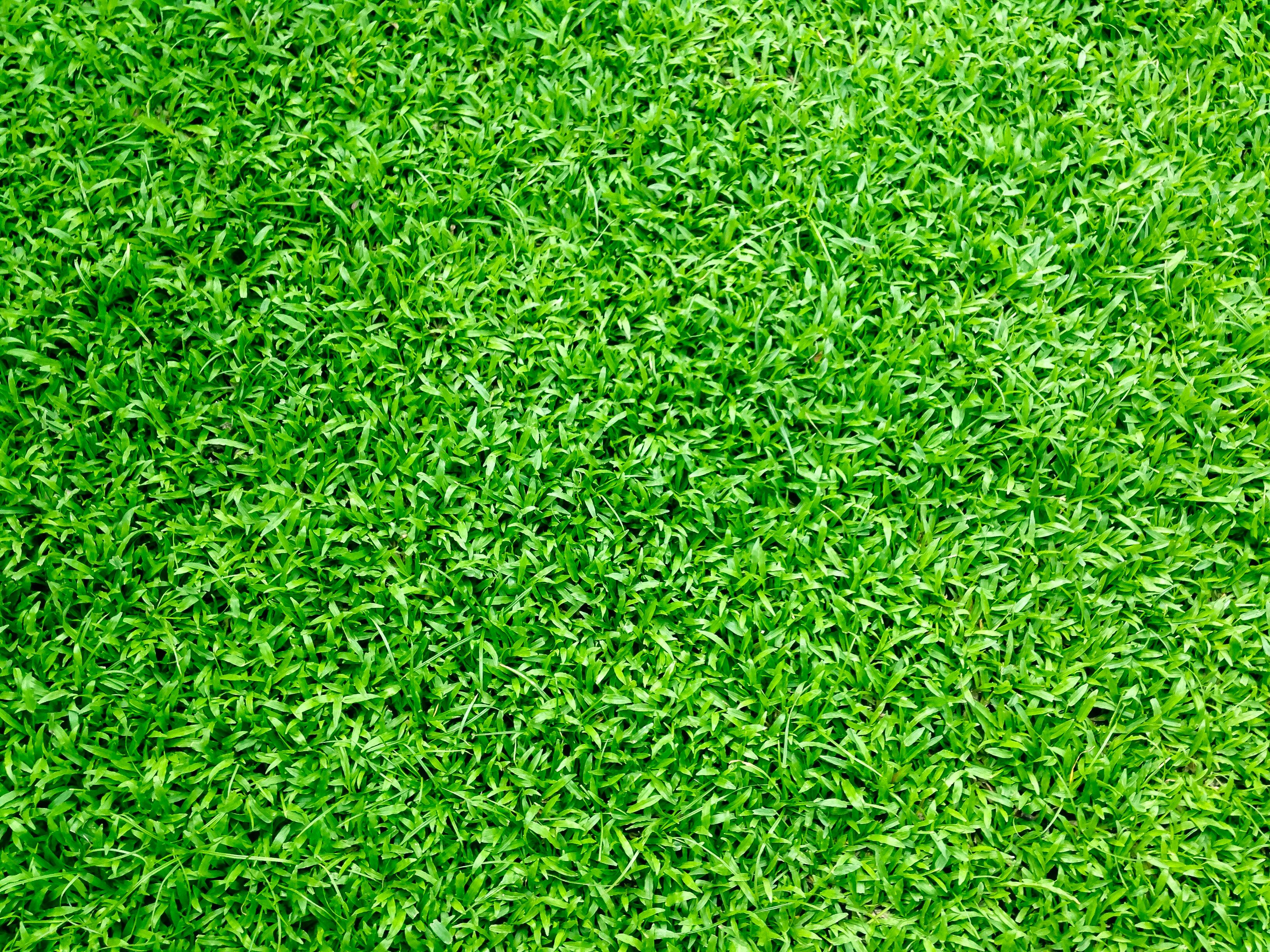 free lawn