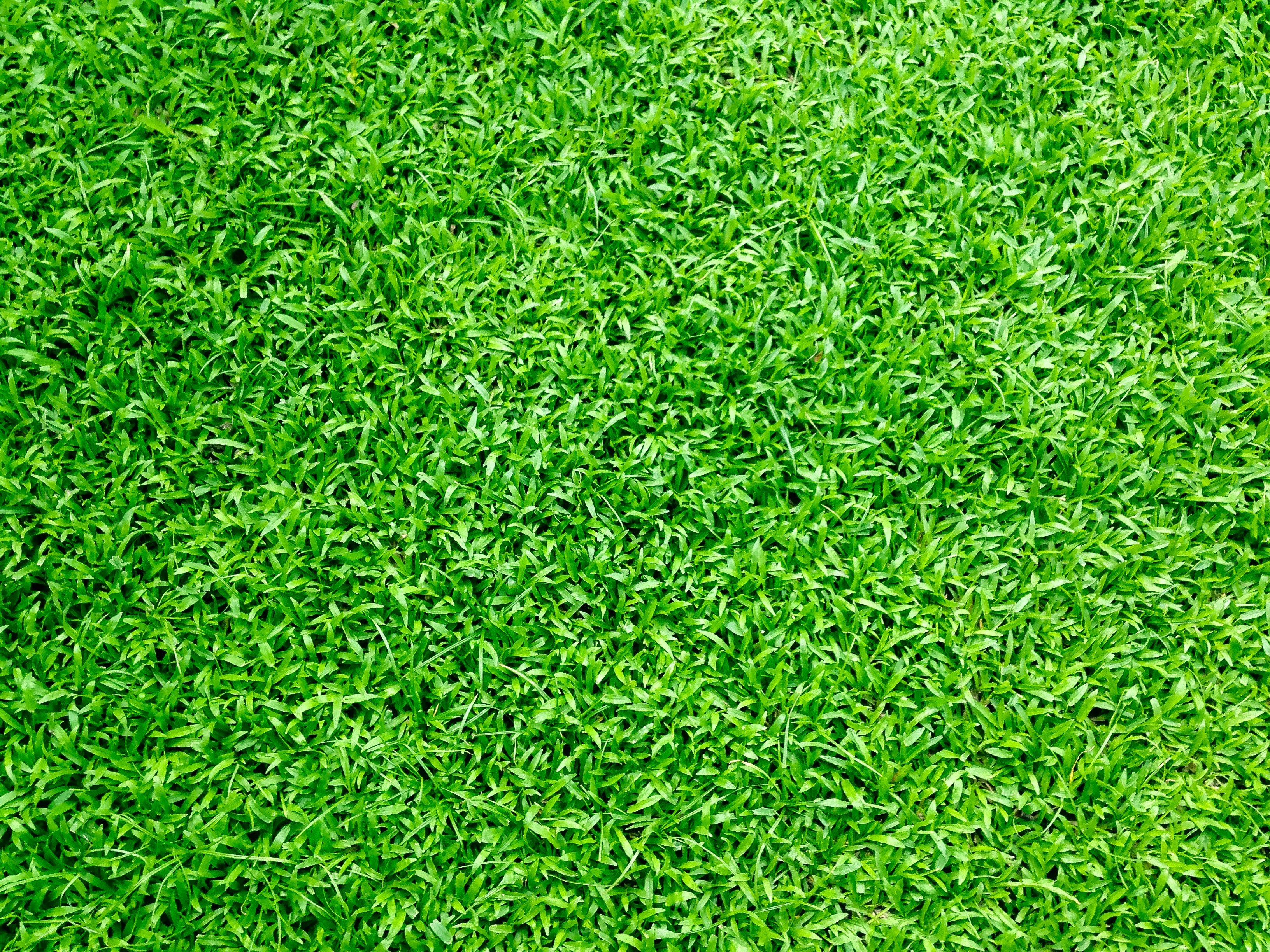 photo relating to Printable Grass named 1000+ Attractive Gr Photographs · Pexels · Cost-free Inventory Visuals