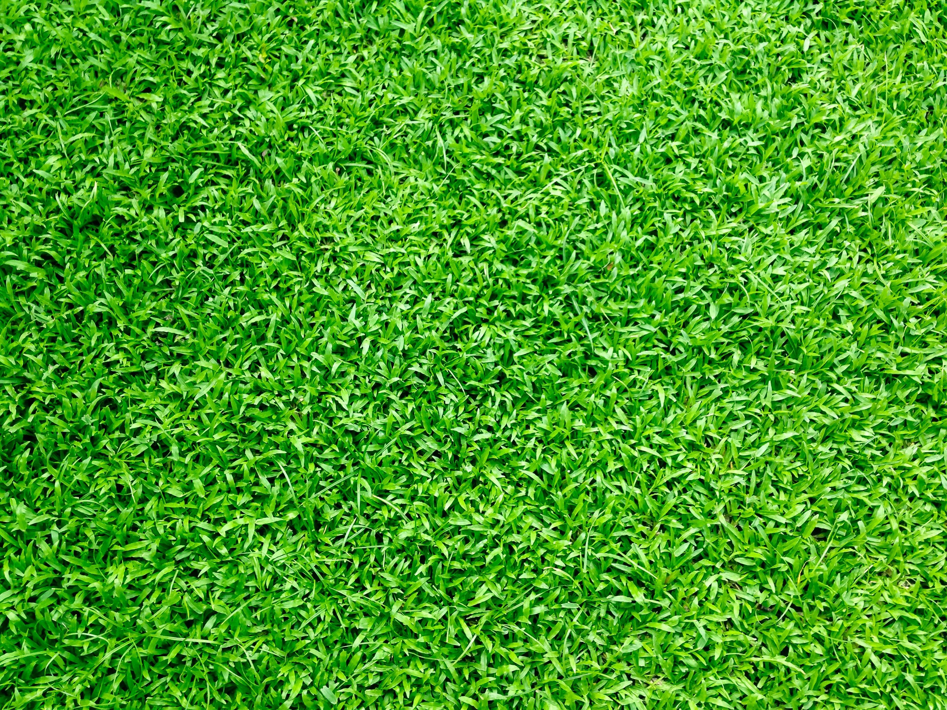 Безкоштовне стокове фото на тему «великий план, газон, двір, зелена трава»