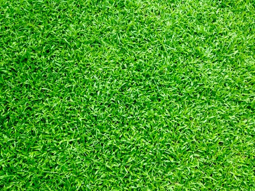 10 000 Best Grass Images 100 Free Download Pexels Stock Photos