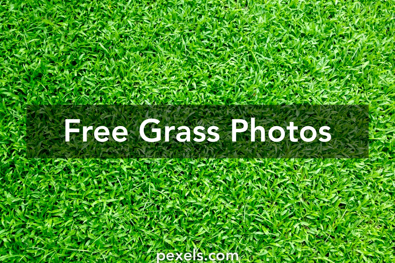 1000+ Beautiful Grass Photos · Pexels · Free Stock Photos